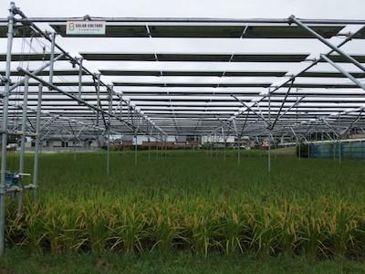 営農型太陽光発電システム設置事例 掛川市