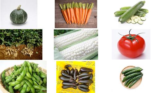 昨年はこんな野菜が人気でした!