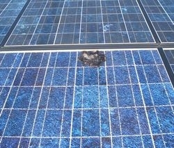 太陽電池パネルが焼け焦げたように黒くなっています。